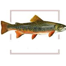 Trout Digital logo